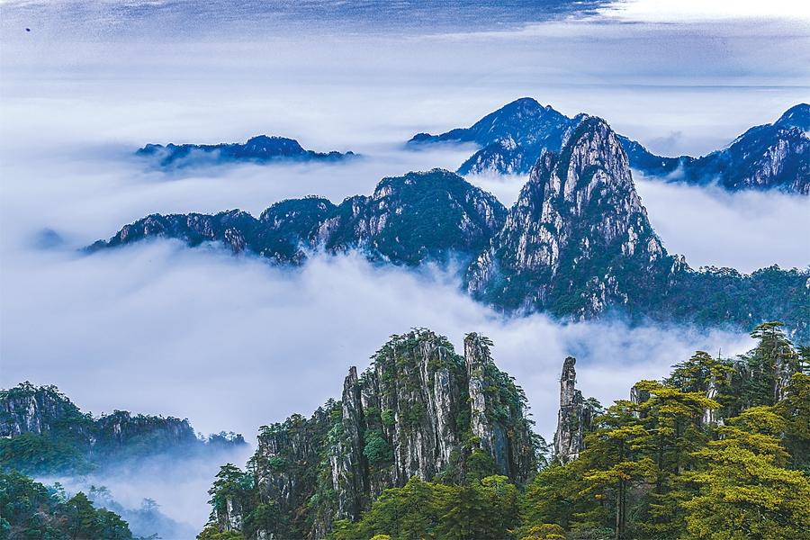 11月7日,黄山风景区出现蓝天云海美景,阳光映照下,云蒸霞蔚,美不胜